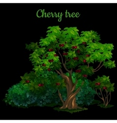 Green cherry tree isolated on black background vector image