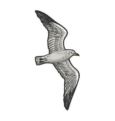 seagull bird sketch engraving vector image