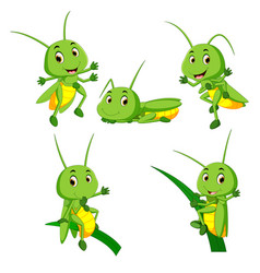 Set collection grasshopper cartoon vector