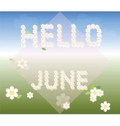Hello June background with chamomiles vector image