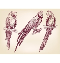 Parrot set isolated hand drawn llustration vector image vector image
