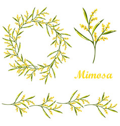Cartoon mimosa spring flower set vector