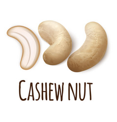 cashew nut icon realistic style vector image