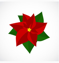 flat icon christmas poinsettia flower vector image