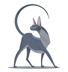 Graceful sphinx vector