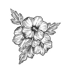 hibiscus flower engraving vector image