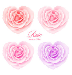 roses flowers in heart shape vector image