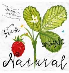 Watercolor wild strawberry vector