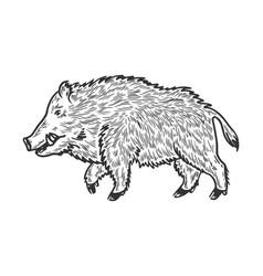 wild boar sketch engraving vector image