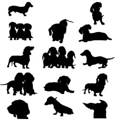 dachshund dog image vector image vector image