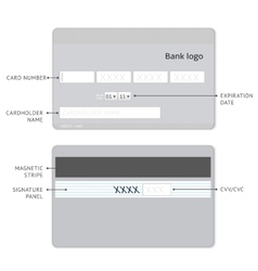 credit card infographic vector image