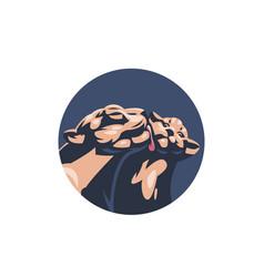 puma or lioness vector image