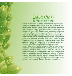 Green leaves abstract background for brochures vector image