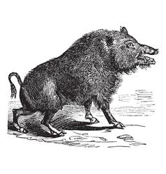 Wild boar sketch vector