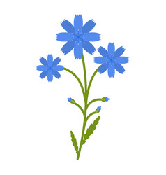 chicory flower flat icon wild flowers plant vector image