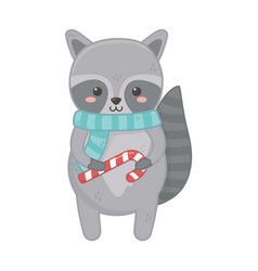 Cute raccoon with scarf and candy cane merry vector