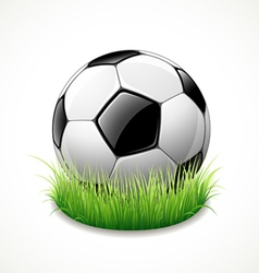 football on green grass vector image