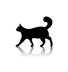 Cat icon symbol on white vector image vector image