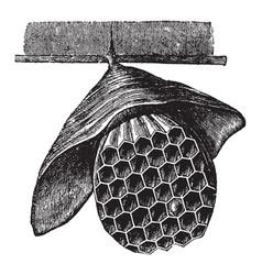 Hanging hornet nest vintage vector