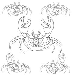 Set of crabs isolated object vector image
