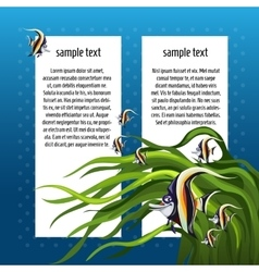Angelfish among the algae with white card for text vector image