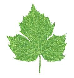 Chaya leaf vector