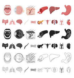 internal organs of a human cartoon icons in set vector image