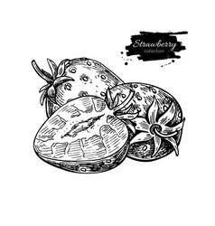 strawberry drawing isolated hand drawn vector image vector image