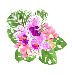 Tropical orchids cymbidium pink vector