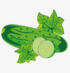 vegetable ripe cucumber vector image