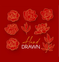 hand drawn peony flowers collection elegant vector image