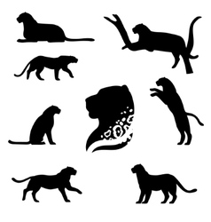 Leopard set vector
