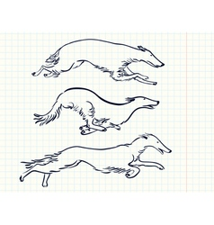 Russian Borzoi Dogs vector image
