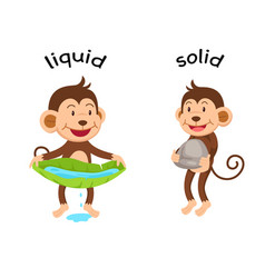 opposite words liquid and solid vector image vector image