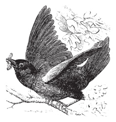Eastern bluebird Sketch vector