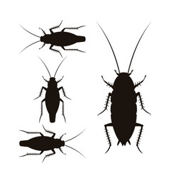 oriental and german cockroaches vector image