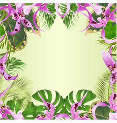 seamless border tropical flowers orchid vector image