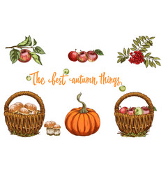 set of autumn objects mushrooms apple pumpkin vector image
