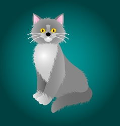 gray cat -with -white chest vector image vector image