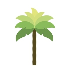 palm tropical tree isolated icon vector image