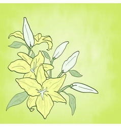 background with green flower lily spring theme vector image