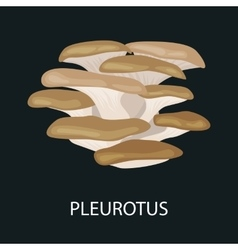 Branch of oyster mushroom Pleurotus ostreatus vector