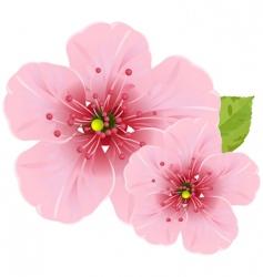 Cherry blossom flowers vector