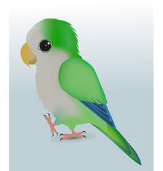 Cute parrot vector image