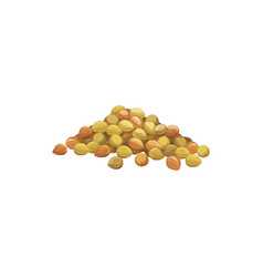 Heap chickpeas isolated pile soy beans vector