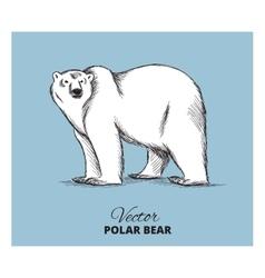 Polar bear hand drawn vector image