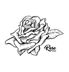 rose wine flower hand drawn ink pen vector image