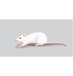 white rat isolated on gray background vector image