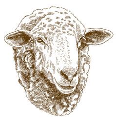 Engraving drawing of sheep head vector