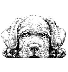 Labrador puppy vector